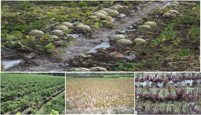 pertanianmriyan